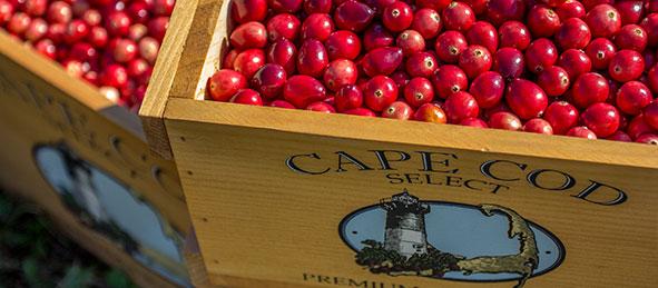 cape-cod-select-fresh-cranberries